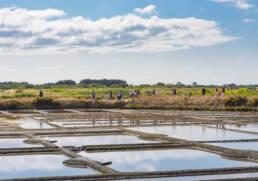 Visite guidée des marais salants avec un paludier